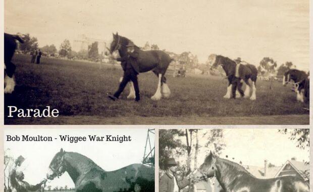 Berrigan Show - horses